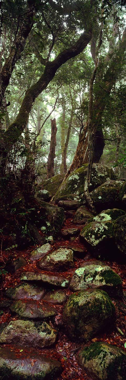 Lamington National Park, Gold Coast - Landscape Photography