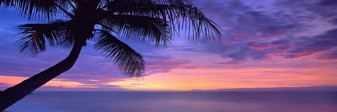Sunset Silhouette Palm Tree - Landscape Photography
