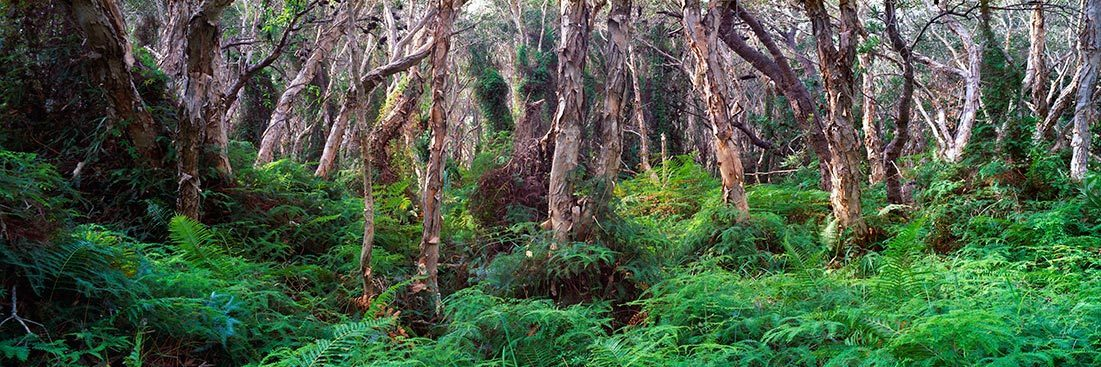 North Stradbroke Forest