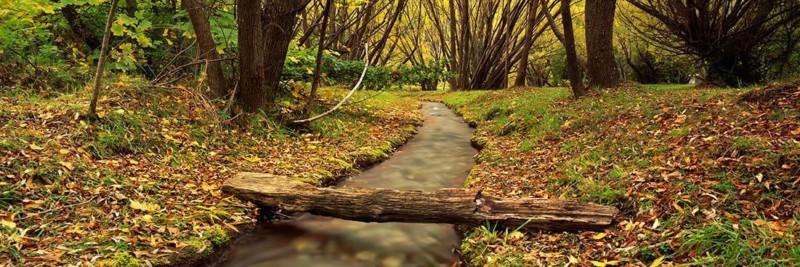 Autumn in Arrowtown New Zealand