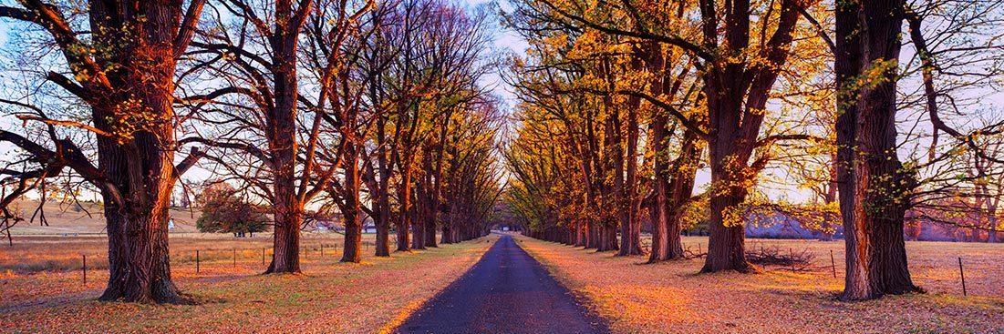 Uralla Autumn Scene