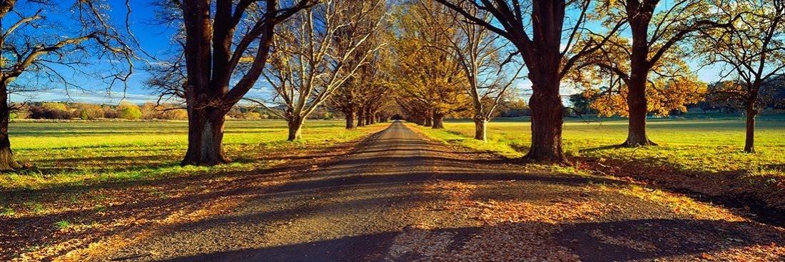 Hallowed Path