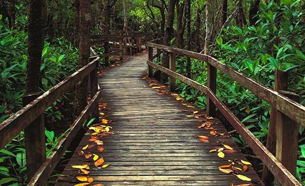 Mangrove Flurry