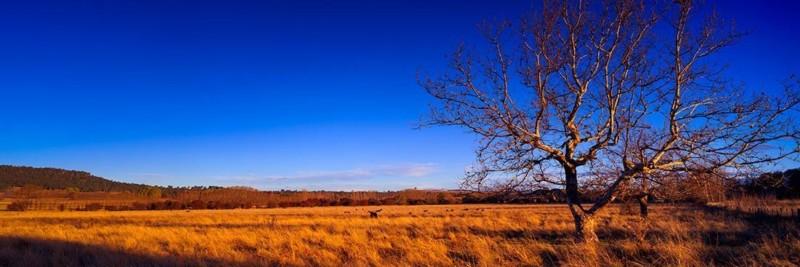 Grassy Field, New England Tablelands