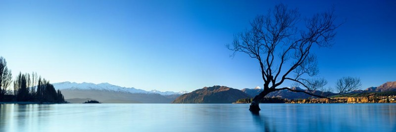 Lake Wanaka Lone Tree Photo