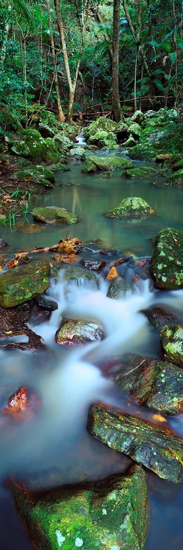 Kondalilla National Park - Landscape Photography