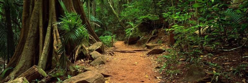 Tamborine National Park Queensland