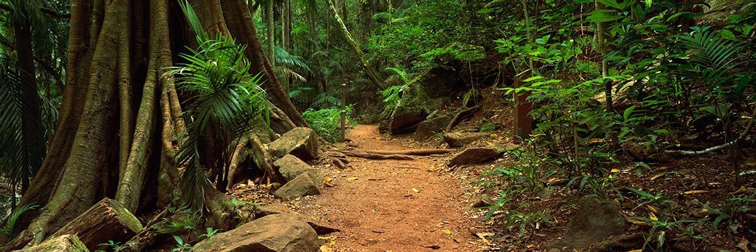 Tamborine National Park Queensland