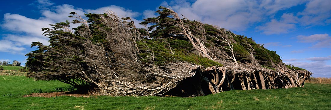 Windy Tress, New Zealand