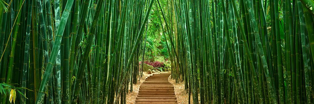Zen Landscape Photography