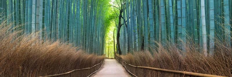 Kyoto Bamboo Forest, Arashiyama - Landscape Photography
