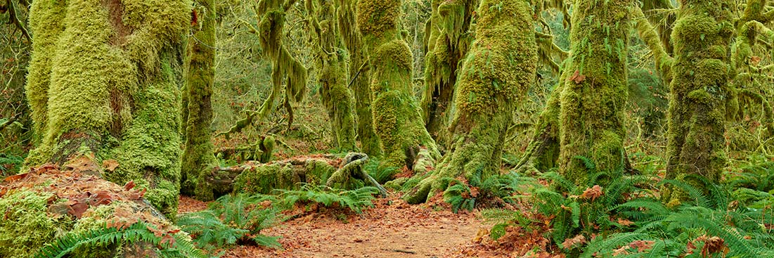 Hoh Rain Forest, Olympic National Park Photos